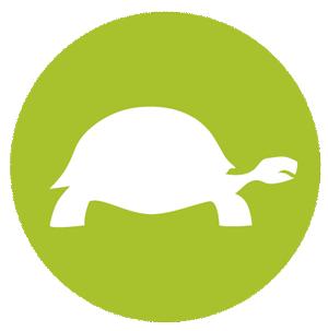 Carrera de Tortugas - Comunicación y diseño